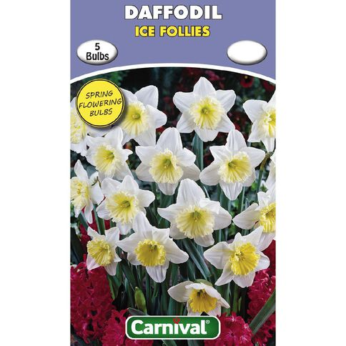 Carnival Daffodil Bulb Ice Follies 5 Pack