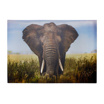 Elephant print canvas