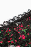 Lace thong with floral pattern, Black, hi-res