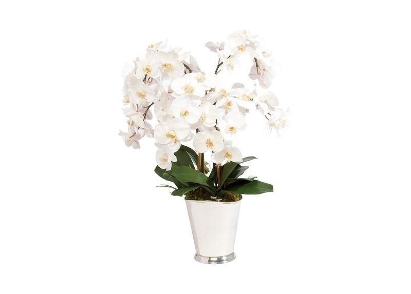 White Orchid Arrangement ,  , large_gray