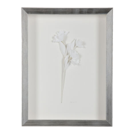 White Dogwood ,  , large