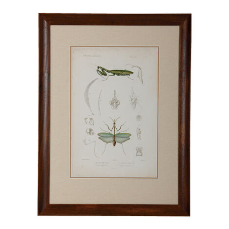 Insect Study I ,  , large