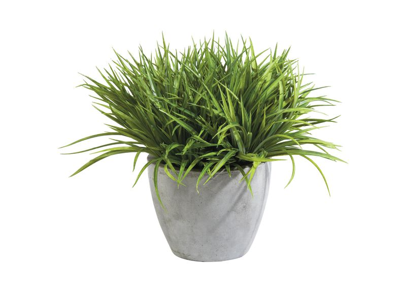 Grass in Aged Gray Pot ,  , large_gray