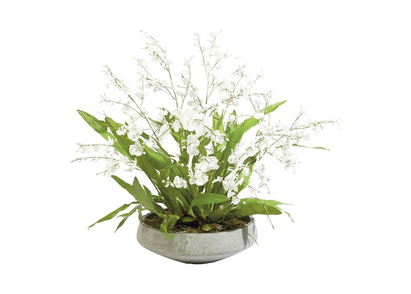 White Oncidiums in Aged Bowl ,  , large_gray