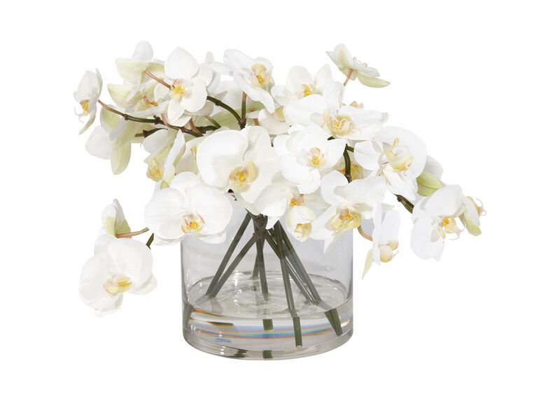 White Orchids in Glass Cylinder ,  , large_gray