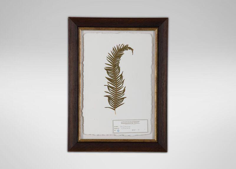 Bupleurum II | Pressed Botanicals