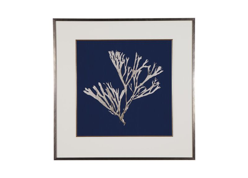 Seaweed on Navy II ,  , large_gray