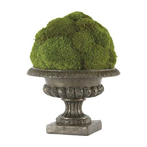 Moss Ball in Urn ,  , large