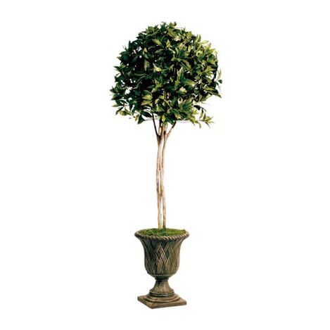 Sweet Bay Topiary ,  , large