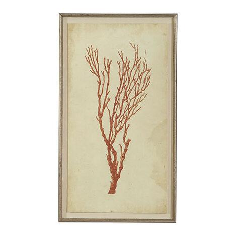 Antique Coral Specimen A ,  , large