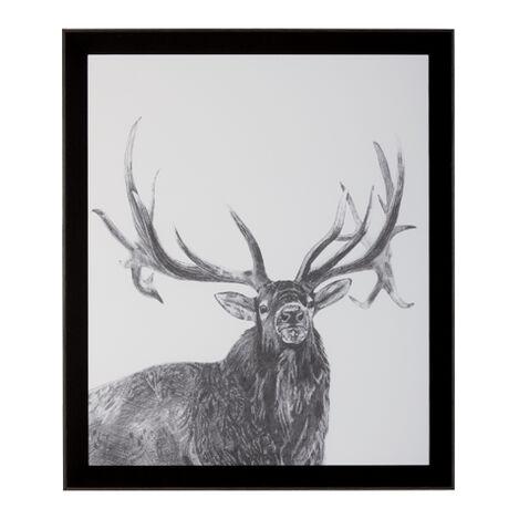 Elk ,  , large