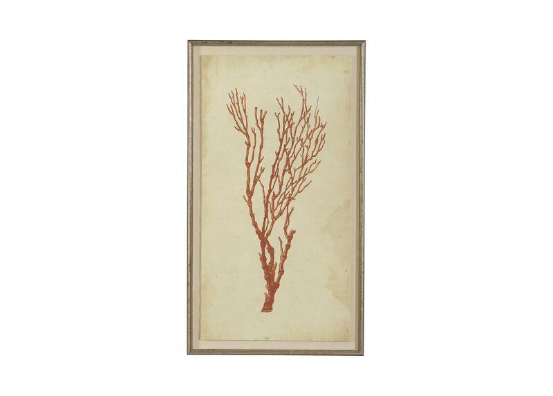 Antique Coral Specimen A ,  , large_gray