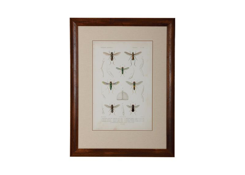 Insect Study II ,  , large_gray