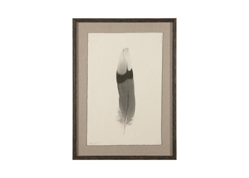 Feather Study III ,  , large_gray