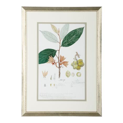 Botanical VII ,  , large