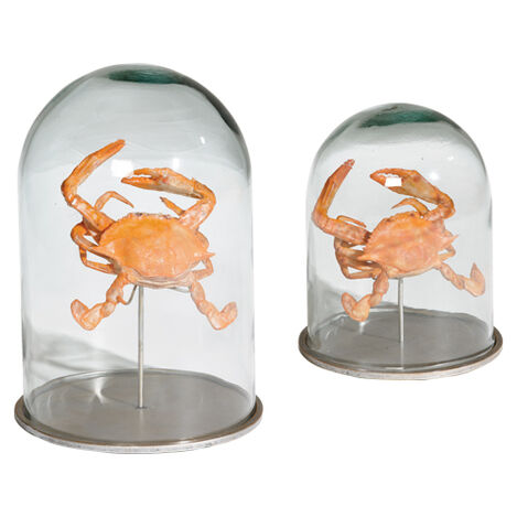 Crab In Glass Cloches Large