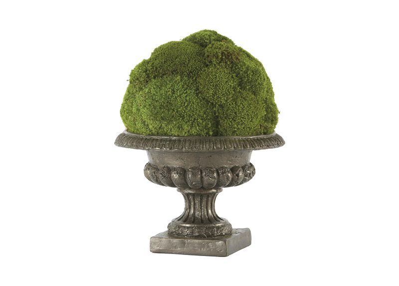 Moss Ball in Urn ,  , large_gray