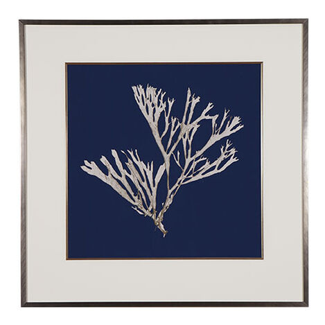 Seaweed on Navy II ,  , large