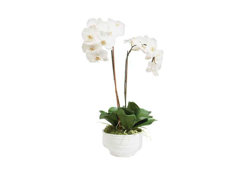 White Orchid in Ceramic Pot ,  , large_gray