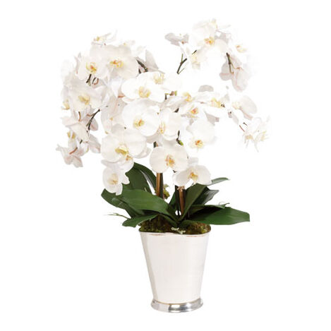 White Orchid Arrangement ,  , large
