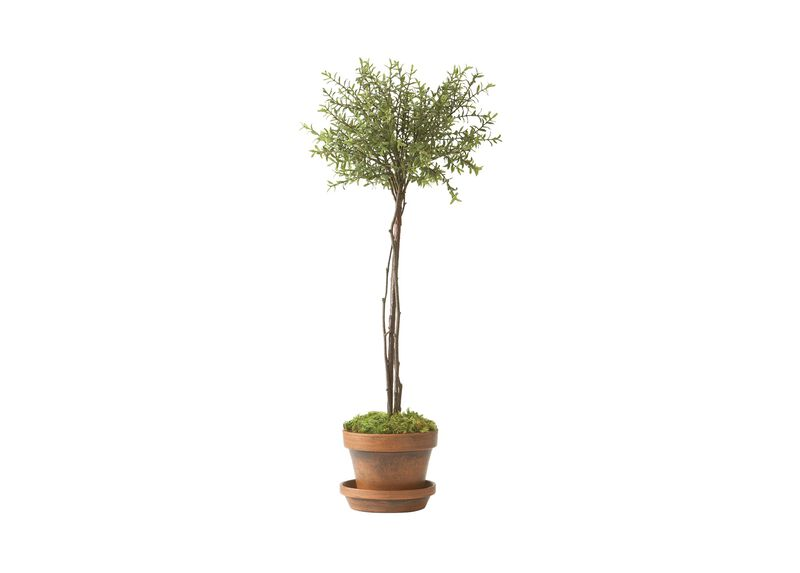 Thyme Topiary ,  , large_gray