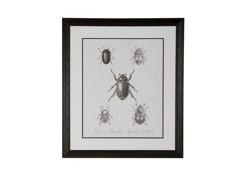 Woodland Insects II ,  , large_gray