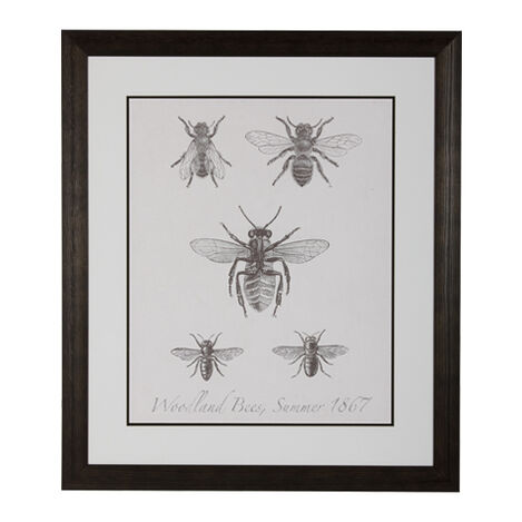 Woodland Insects I ,  , large