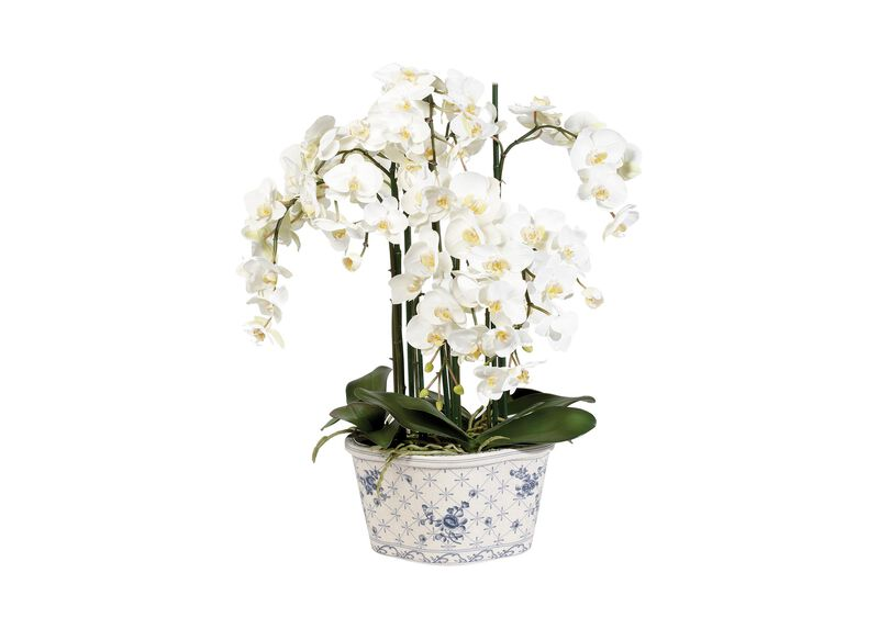 Phalaenopsis in Ceramic Pot ,  , large_gray