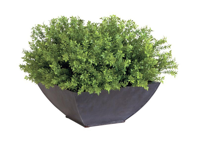 Tea Leaf Bonsai ,  , large_gray
