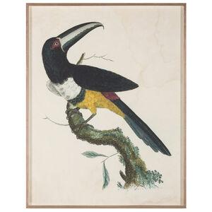 Flora & Fauna - Barraband Toucans 2
